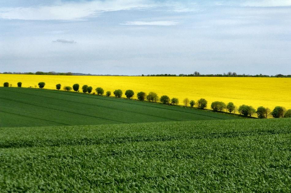 Crops in contrast