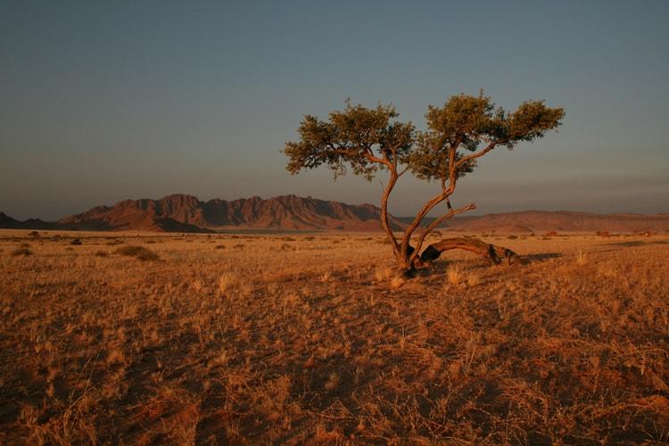 Landscape by Vernon Swanepoel