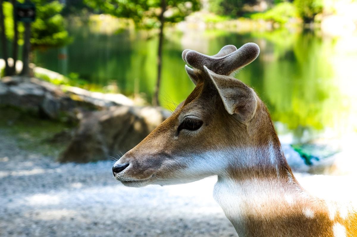Deer Light Leaks
