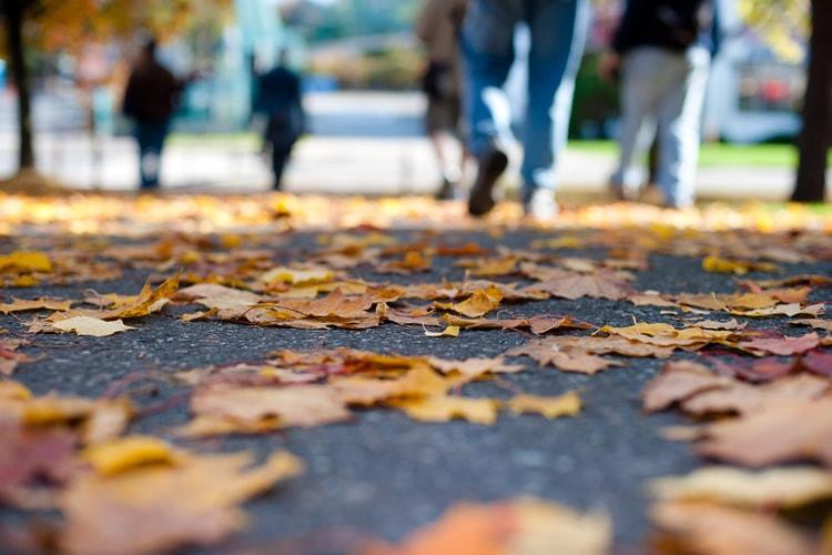 Autumn Photowalk