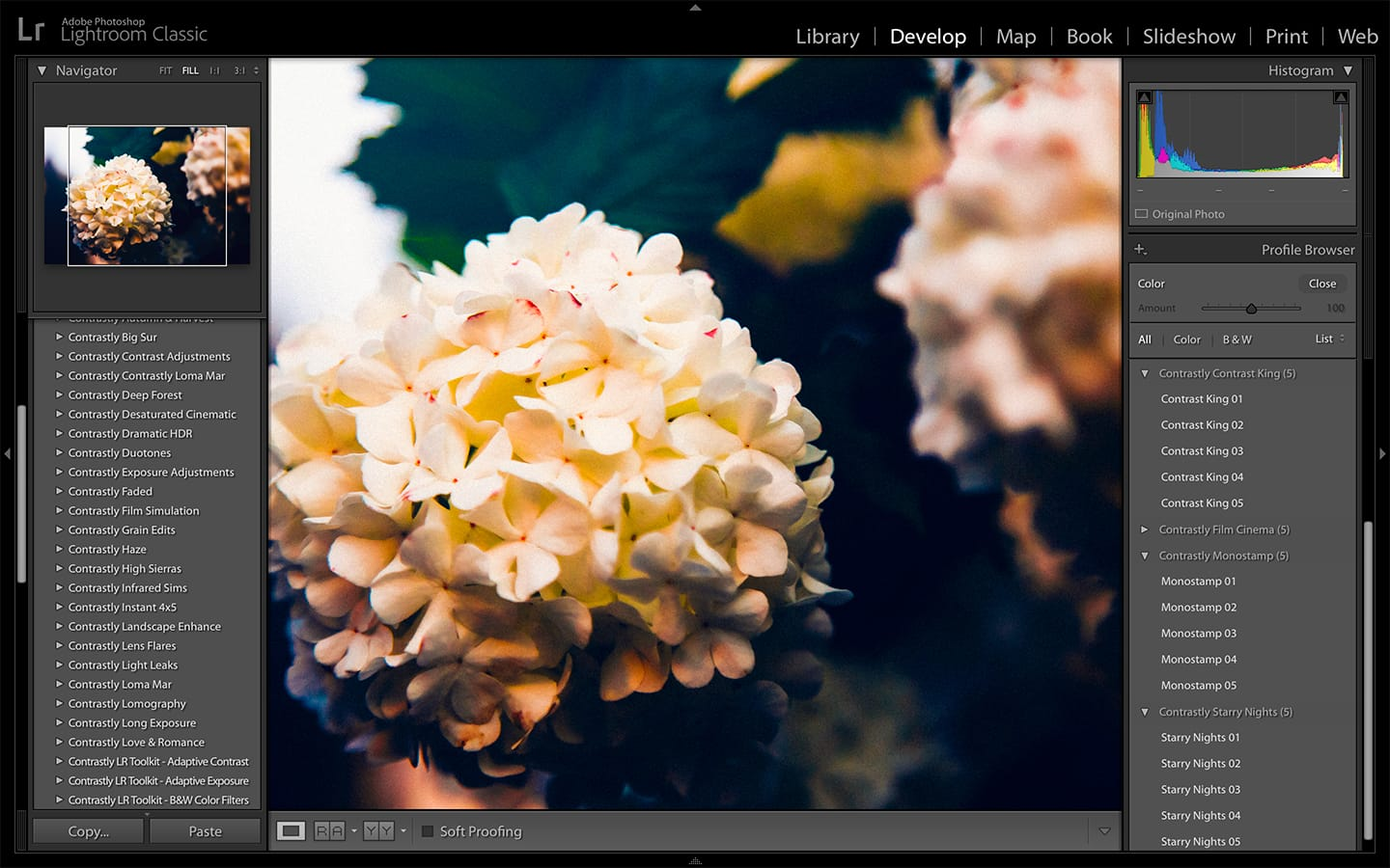 Creative Profiles in Adobe Lightroom Classic