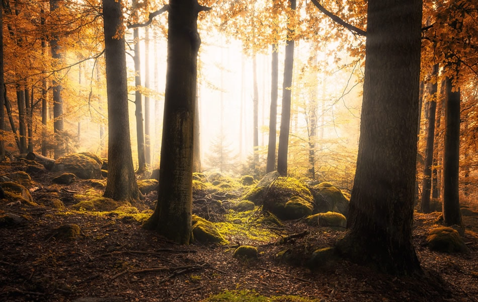 Magic Light in Forest